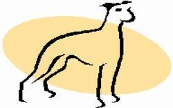 birddog360 bookstore logo