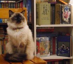 Caerwen Books store photo