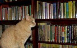 JB Books store photo
