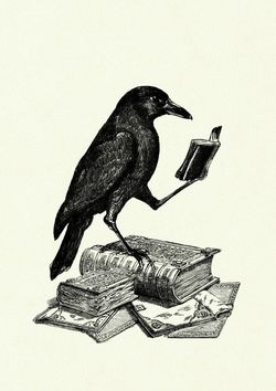 Nevermore Used Books store photo