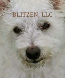 Blitzen Books bookstore logo
