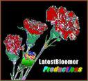 logo: LatestBloomer Ltd.