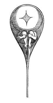 Le Zograscope logo