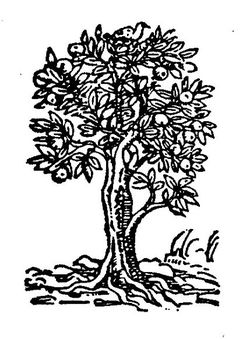 Rootenberg Rare Books & Manuscripts logo