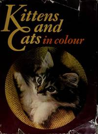 Kittens and Cats in Colour