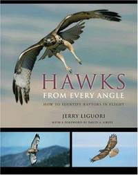 Hawks from Every Angle - How to Identify Raptors in Flight