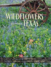Wildflowers Across Texas