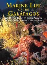Marine Life of the Galapagos