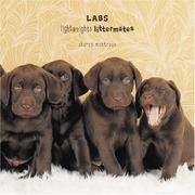 Labs : Lightweights Littermates