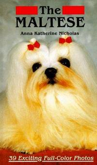 The Maltese the Maltese Dog