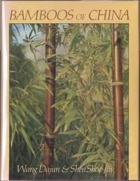 Bamboos of China