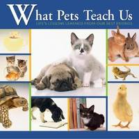 What Pets Teach Us  Life's Lesson Learned from Our Little Friends