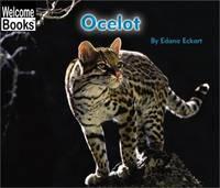 Ocelot (Welcome Books)