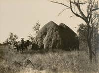 'A Monster Anthill' [Northern Territory, Australia, 1914]