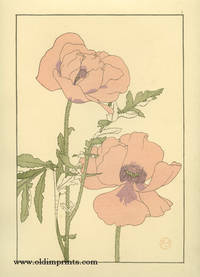The Oriental Poppy