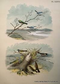 Plate XXXVII  The Blue-gray Gnatcatcher (Polioptila caerulea); Black-throated Green Warbler (Dendroica virens); The Blue or Cerulean Warbler (Dendroica caerulea); The Mourning Warbler, The Bay-breasted Autumnal Warbler, The Prairie Warbler, The Golden-crowned Thrush of Oven-bird