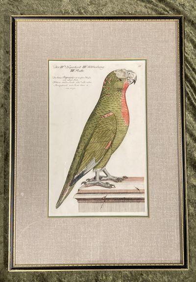 , . Fine. Frisch (Artist), Johann L.. Bird Engraving. Hand-colored Parrot. Plate 46. Papagey. Psitta...