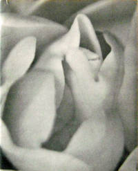 Solstice Blossom (Artist Signed Presentation Copy)
