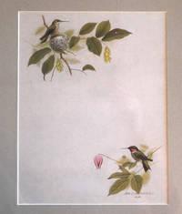image of ( Original Print ) Hummingbird