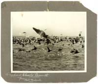 [The Big Whale] Original Photograph