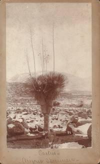 Cactus - Arizona Specimen