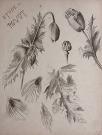 Etude du Pavot; Study of Poppies - original drawing