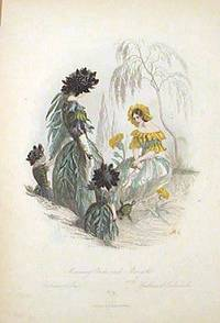 Mourning Bride and Marigold. Scabieuse et Souci. Scabiosa et Calendula