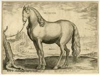 Britannus.  Le Cheval Breton