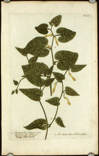 a. Aristolochia longa vera, Aristoloche longue...b. Aristolochia Clematitis