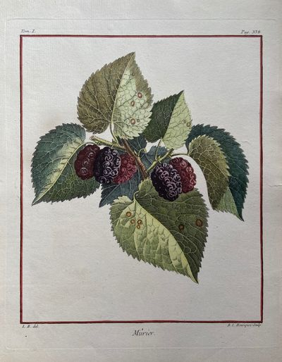 Paris, 1768. unbound. very good. Rene Le Berryais. Fruit Botanical. Stipple engraving with hand colo...