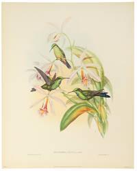 Six Full Color Prints Humming Birds. A Portfolio of Six Magnificent Color Prints..