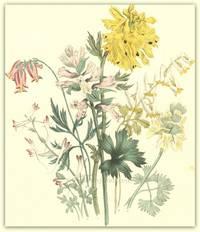 Plate 16. Corydalis nobilis, Corydalis bracteata, Corydalis tuberosa (cava), Corydalis longiflora, Dielytra formosa, Dielytra cucullaria