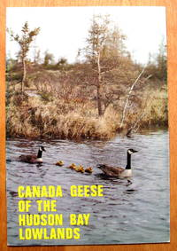 Canada Geese of the Hudson Bay Lowlands