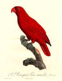 Le Perroquet Lori-unicolor [Lory (Lorius sp.)]