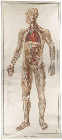 Blutkreislauf.
