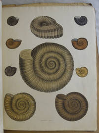 Illustrations of the Fossil Conchology of Great Britain and Ireland, with the descriptions and localities of all the species hitherto discovered. Parts 1,2,4,5,6,7, 8 [incomplete], 9, 10,11,12,19/20