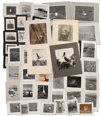 47 Photographs of Mid-Atlantic Woodland and Shorebirds