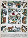View Image 2 of 4 for Jeu du Jardin Zoologique. Thiergarten-Spiel Inventory #1002684