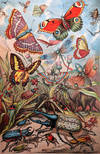 View Image 1 of 8 for The Living World: A Complete Natural History of the World's Creatures, Fishes, Reptiles, Insects, Bi... Inventory #RW1338