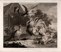[A set of four ornithological prints]