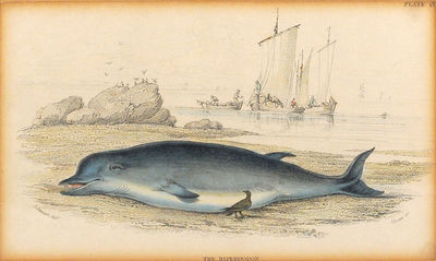 """4 x 6 3/8"""" hand-colored steel engraving. . 4 x 6 3/8"""" hand-colored steel engraving, on paper. Cl..."""