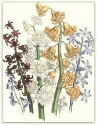 Plate 46. Hyacinthus amethystinus, Hyacinthus spicatus, Hyacinthus orientalis, Hyacinthus orientalis (the Duo de Berri d'ol), Hyacinthus orientalis (the Gloria Florum suprema), Hyacinthus orientalis (the Duchess of Kent)