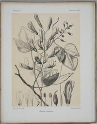 image of Histoire physique, naturelle et politique de Madagascar.  Volume Vol. XXVIII. Tome II, Atlas, Part I, Histoire Naturelle des Plantes.  Atlas (plates)
