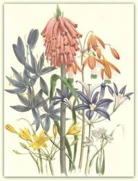 Plate 41. Velthemia glauca, Bessera elegans, Brodiaea grandi-flora, Camassia esculeuta, Calliprora lutea, Puschkinia Scilloides