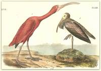 Pl. 359 Scarlet Ibis ( 1. Adult Male 2. Young second Autumn)