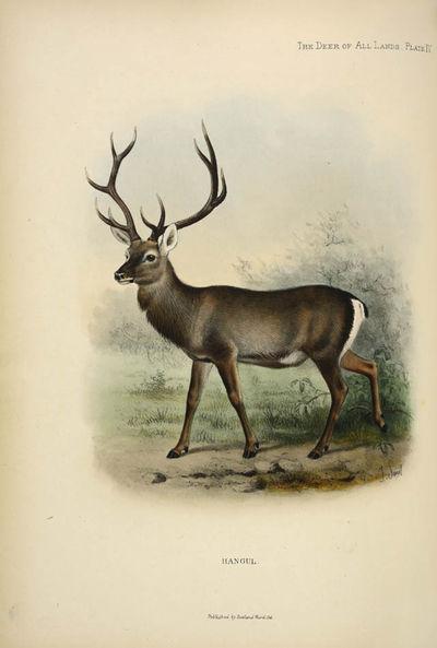 The deer of all lands.
