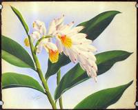 Untitled airbrush painting of a Hawaiian orchid.