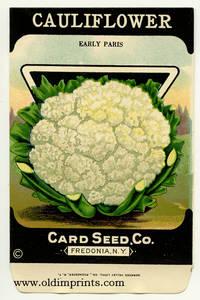 Cauliflower. (Early Paris)