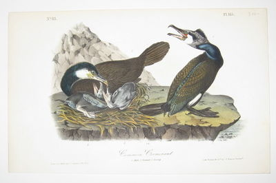 Philadelphia: J.T. Bowen. unbound. very good. Octavo bird print. Lithograph with original hand color...