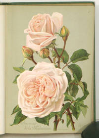 The Amateur Gardener's Rose Book.